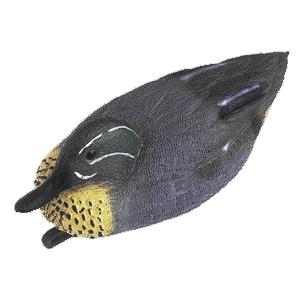 Čírka kachna
