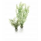 biOrb rostliny zimní barvy 2