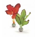 biOrb rostliny malé červená a zelená