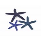 biOrb mořské hvězdice modré